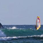 Wild Wild Whales!